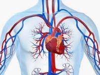 پاورپوینت آناتومی قلب