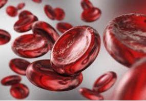 پاورپوینت در مورد خون