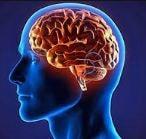 پاورپوینت آناتومی سیستم عصبی